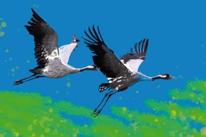 Time of Cranes